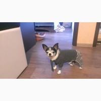 Одежда для маленьких собак. Трикотажный комбинезончик