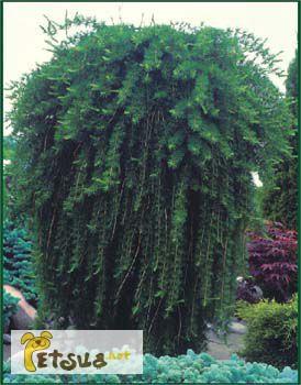 Фото 1/1. Декоративные растения