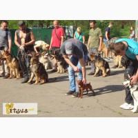 SMART-DOG - Центр дрессировки собак в Одессе