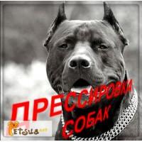 Кінолог. Дресирування собак Кам#039;янець-Подільський