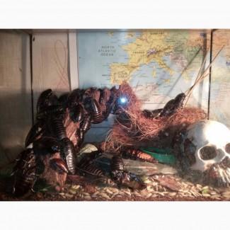Мадагаскарские шипящие тараканы продаем