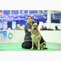 Продажа щенков восточно-европейской овчарки от титулованного рода