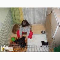 Манеж - клетка для собак, щенков, кошек после операции